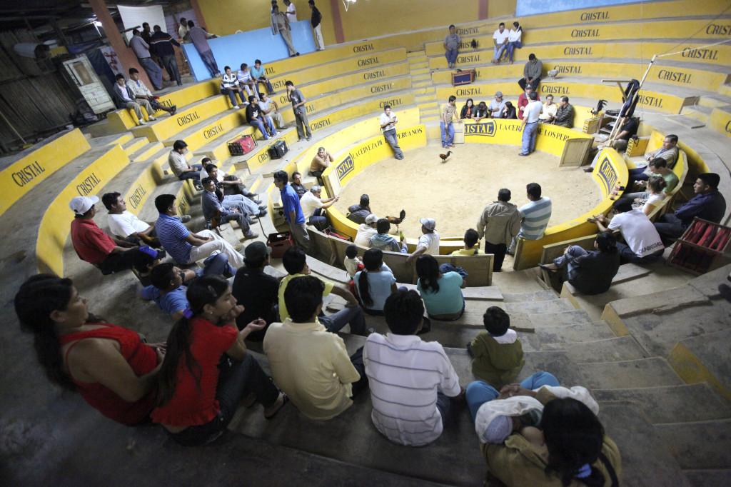 Aréna pro kohoutí zápasy