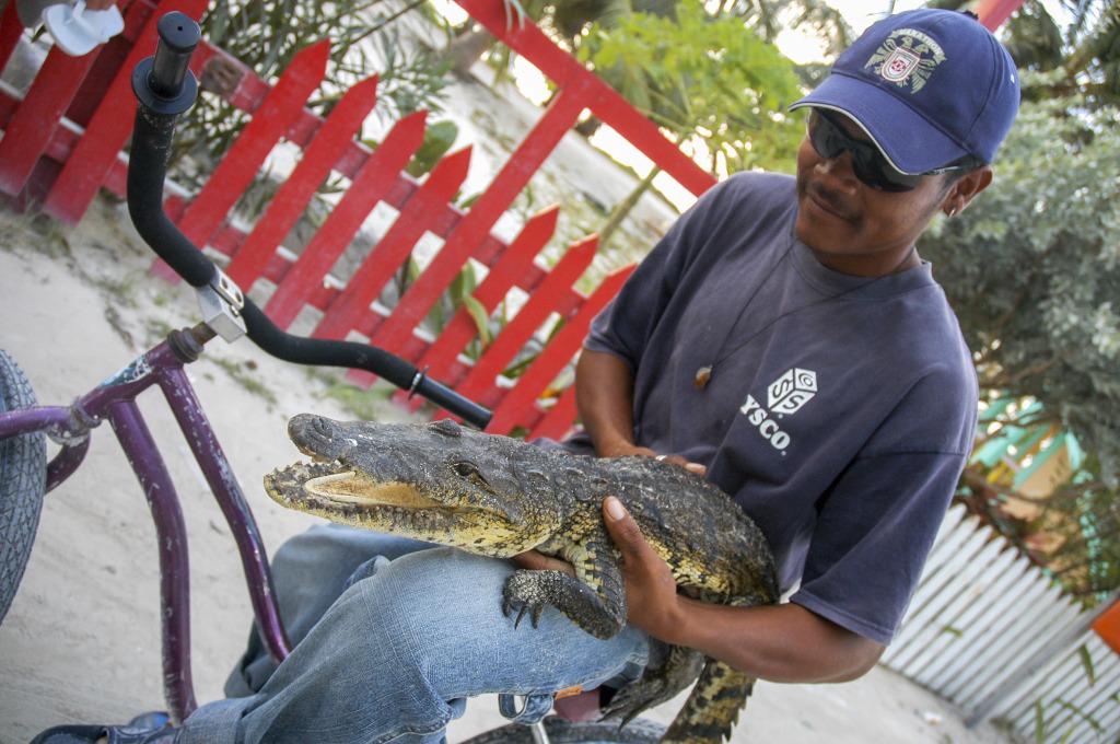 Belize_krokodyl_4