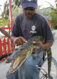 Belize_krokodyl_5