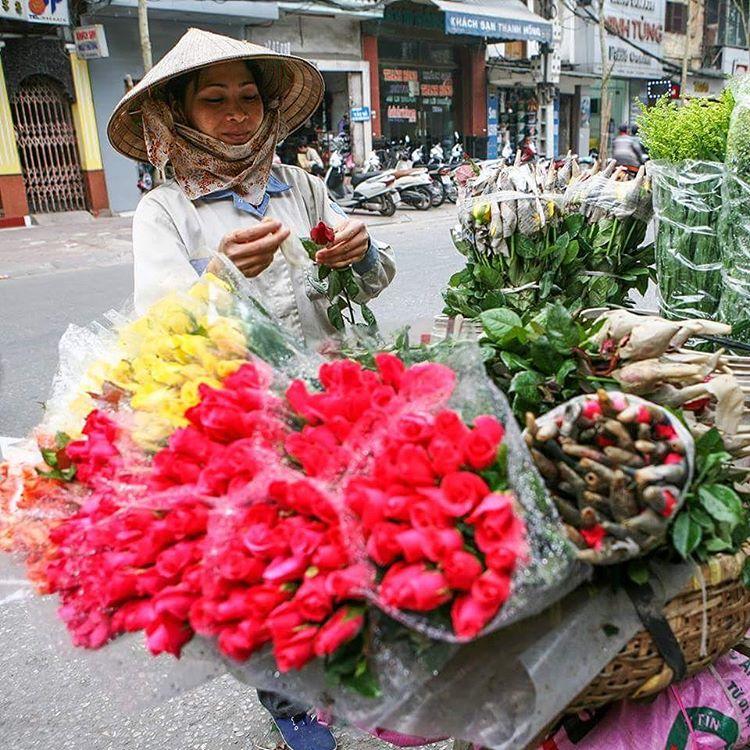 Roses in Hanoi Vietnam  mylosthat travel travelblog travelblogger travelbloggerlifehellip
