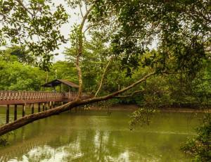 V rezervaci jsou pro návštěvníky připraveny dřevěné chodníky nad úrovní terénu. Foto: Eva Janů