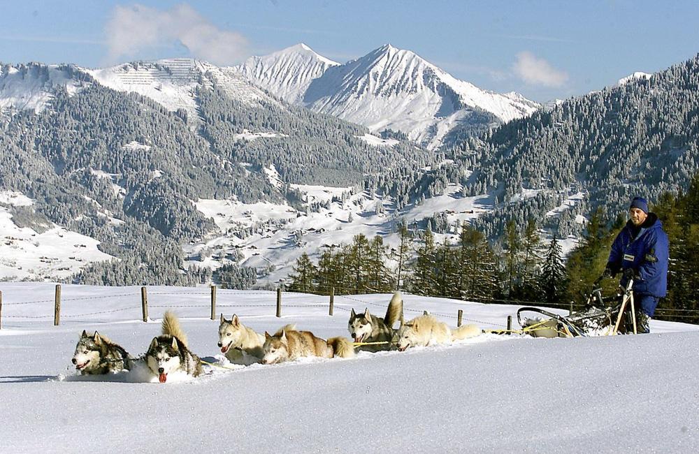 5_Psi_sprezeni_Husky_Toni_Brandnertal_foto_Alpenregion_Bludenz