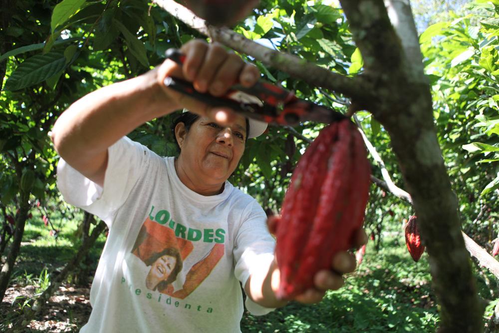 Juana na plantážích s kakaem pracuje i za svého nemocného muže.