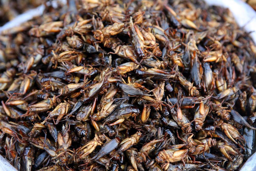 Cvrčci patří ke klasice Entomofágie, Jedí se po celém světě. Jako většina hmyzu přebírají chuť přísad, takže je můžete jíst na sladko i na slano.