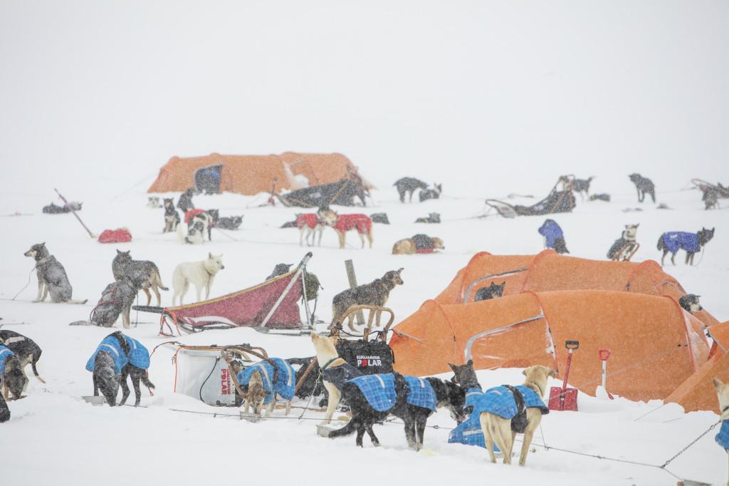Tábor se psími spřeženími.