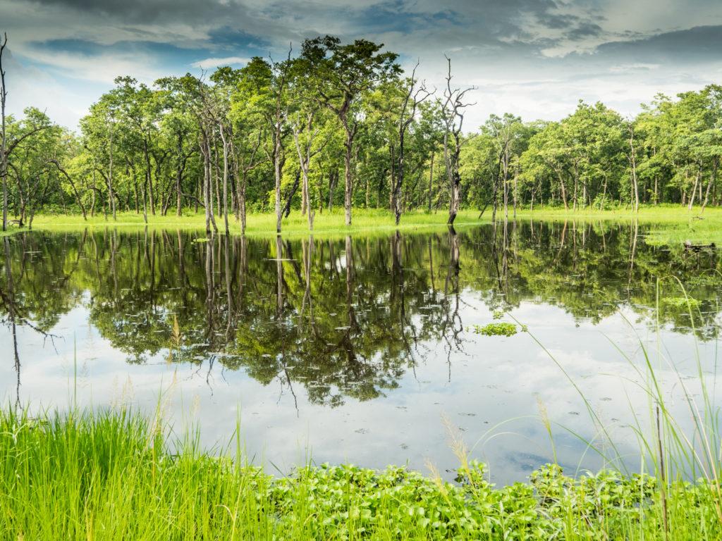 jezírko v pralese