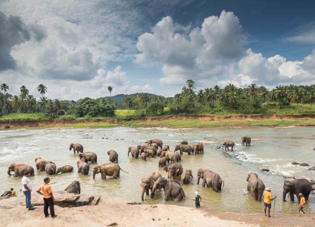 Pinavalla, sloní sirotčinec.