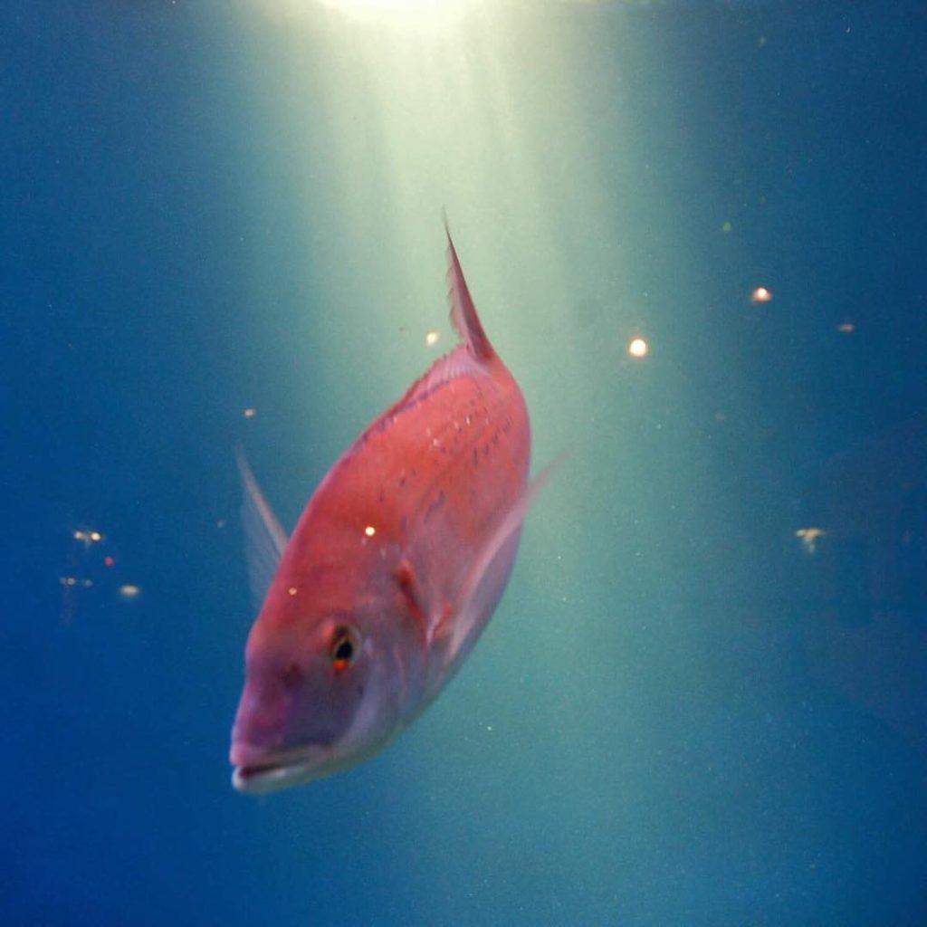 Aquarium in Santiago de Compostela Spain tripcendo mylifeoutside wildculturecz mylosthathellip