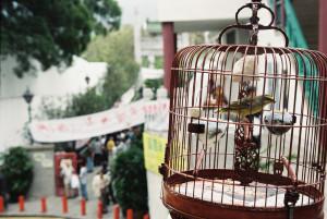 Ptačí trh, to je boží místo. Jako u nás burza králíků a slepic.