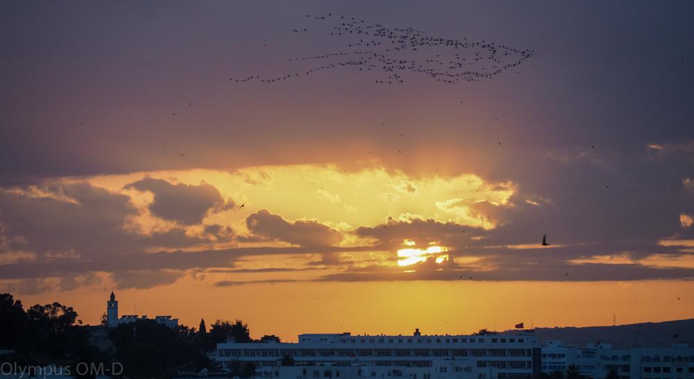 Kolem poletovaly stovky vlaštovek a štěbetaly do zpěvu Muezínů.