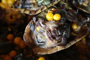 Taková vařená želva vypadá jako ta živá, jen je uvařená!