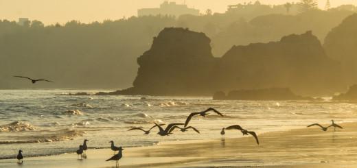 Siluety racků na pláži v Portugalsku