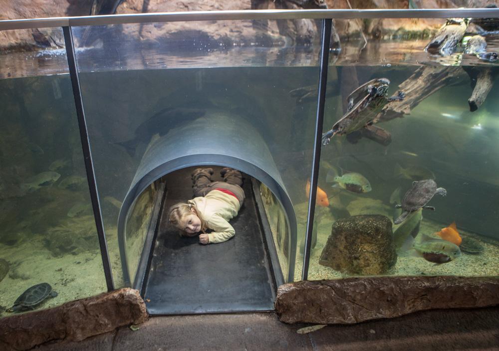 Akvarium s tunelem pro děti v Haus des Meres