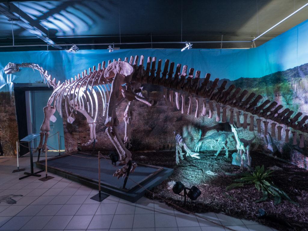 Replika kostry dinosaura v Technickém muzeu v Brně.