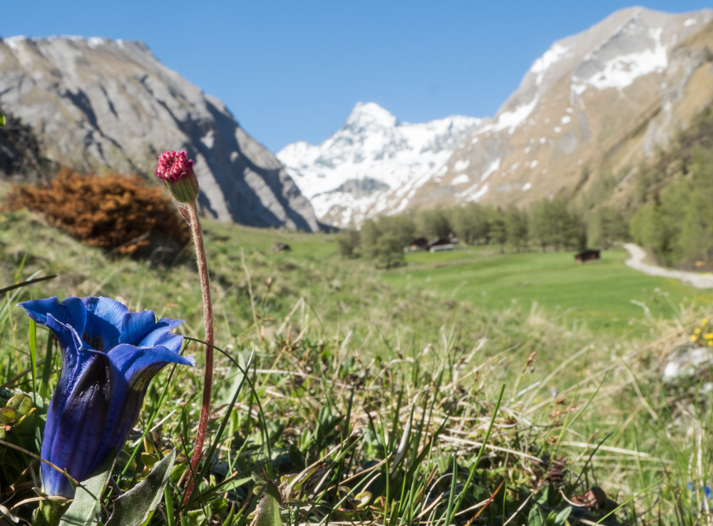 Alpská příroda