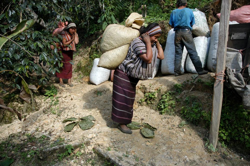 Sběrači kávy